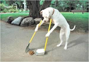 תתוגבר בשכונה פעילות לאיתור כלבים משוטטים ואכיפת איסוף צואת הכלבים על ידי בעליהם.  צילום: אילוסטרציה