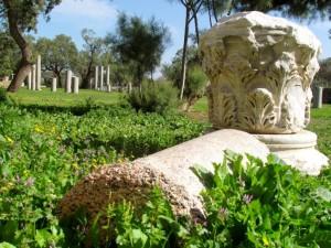 גן לאומי אשקלון צילום ליעד כהן