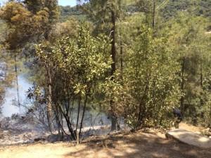 """שריפה בפארק קק""""ל שאירעה ב-2014. שבילי האש יוצרים חיץ מסביב לבתים הגובלים ביערות"""