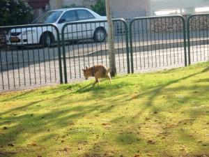 מאז תחילת השנה נרשמו 186 דוחות על ידי מפקחי העירייה כנגד בעלי כלבים שעברו על החוק. צילום: באדיבות השירות הווטרינרי עיריית חיפה