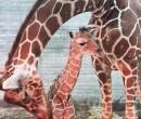 דפי והאמא קיאנגה, מתרגשות מהשעות הראשונות של זמן איכות אמא ובת. צילום: חי פארק מוצקין